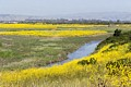 Coyote Hills Regional Park - May 9, 2017